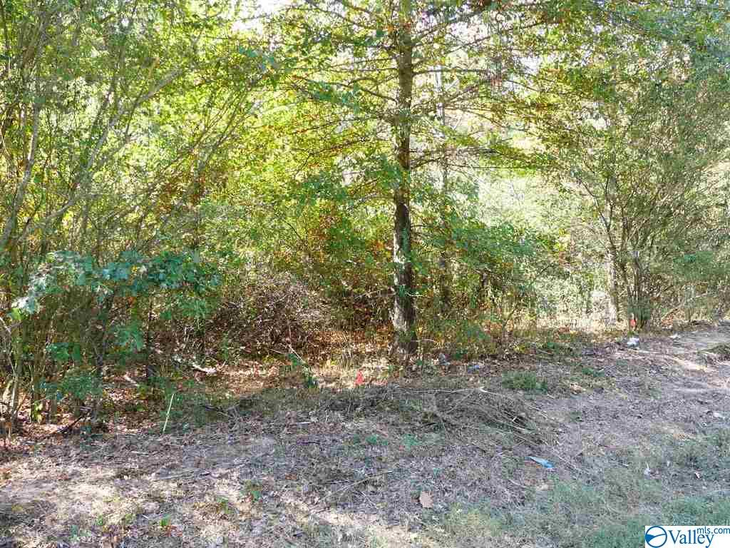 Photo of home for sale at 00 Baker Mountain Road, Grant AL