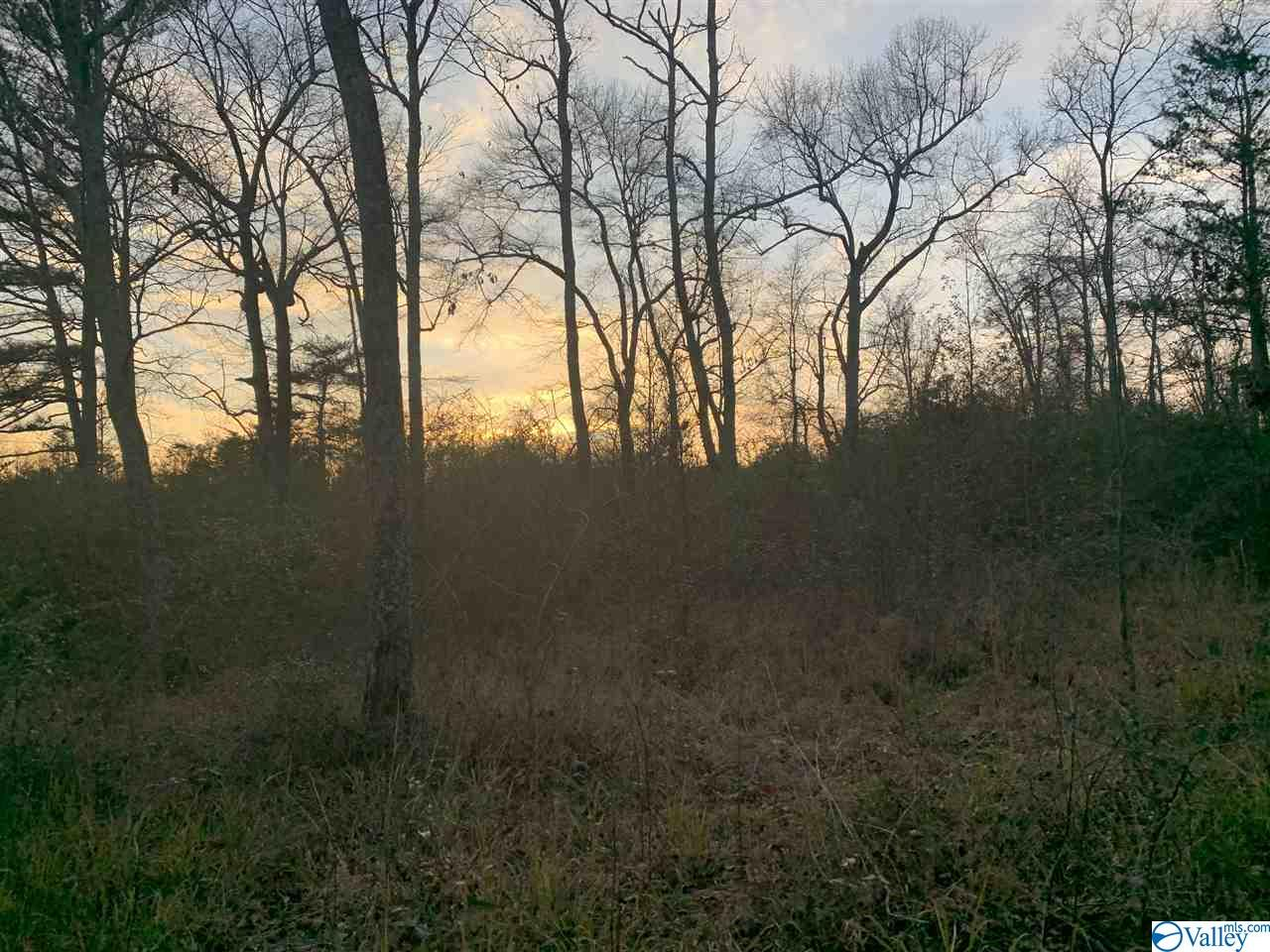 Photo of home for sale at 0 County Road 52, Cedar Bluff AL