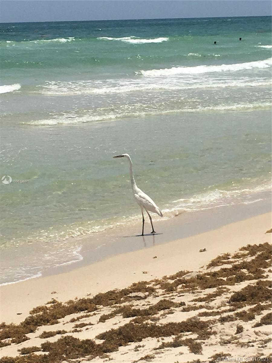 Arlen Beach #1119 photo53