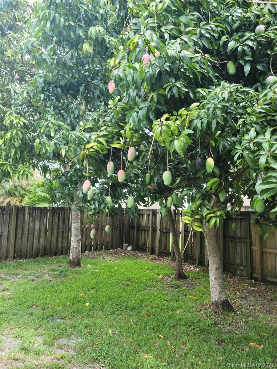 FLA Fruit Lands #0 - 02 - photo