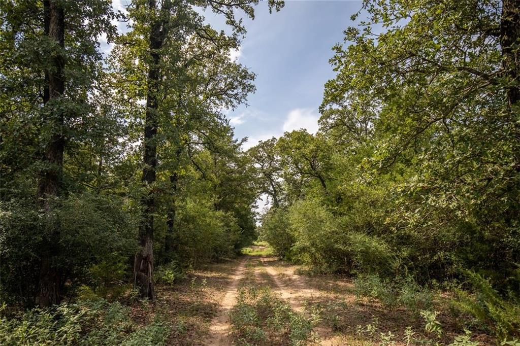 Piney Creek Ranch is a recreational getaway heavily wooded with tons of Post Oaks, Elms, and Pines. The closed canopy forest and Piney Creek serve as a wildlife magnet for deer and hogs. Complete with an older mobile home with all utilities that could serve as temporary housing while you build a new home or a permanent hunting camp. Easily accessed off HWY 304, while only 20 minutes from Bastrop/Smithville, and under an hour to Austin