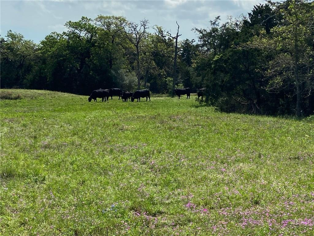55.209 acres near Round Top. Heavily wooded tract on Goehring Road, wildlife place with a nice open pasture in back, mostly wooded oaks. Good road frontage, small pond, electric in place, community water line. Seller is licensed broker. No minerals and seller to waive rights to the surface. Also offering entire 167.518 acres or a 50.062 ac tract.