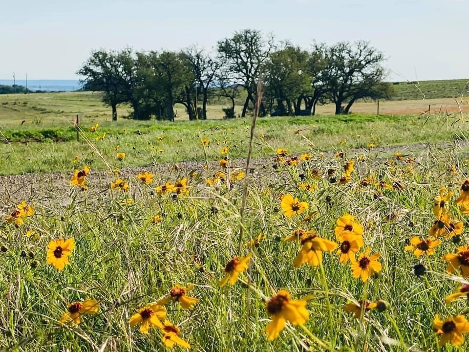 1471 Lutheran Church Rd Ryatt Ranch Lot 1 Blk 1 RD, Copperas Cove, TX 76522