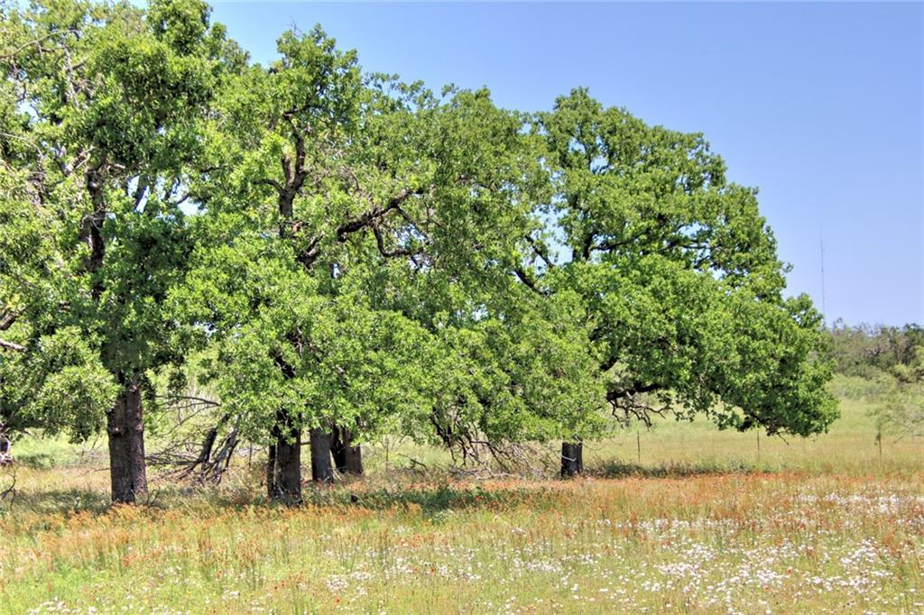 Located in the quaint area of Gillespie County in Willow City this 24 acre tract provides a great place for a home site and recreation. The city of Fredericksburg is less than 15 minutes away, Llano is about 25 minutes, and the larger city of Austin is about an hour and fifteen-minute drive. The recreational area of Enchanted Rock is also just minutes away. The Llano River and the Highland Lakes are also a short drive away.  This property has direct access off FM 1323 and is less than 2 minutes from state highway 16.  The property consists of nice meadows that would be great for horses or other animals. The soils are good sandy loam. Good native grasses are established with excellent potential to plant improved grasses.  There is a nice coverage of Live Oaks and Post Oak trees on the property. A nice homesite under the large trees is located on the back section of the land.  Electric is already on the property as well as a water well.  Deer, turkey, dove, some quail, and other native wildlife are plentiful on the property as well as a variety of native songbirds.  The land carries an agricultural exemption. Fences are found on the front of the property.  There are not many properties available in this very desirable area of Gillespie County. If you are looking for home site or recreational property close to unique shopping, dining, and the wineries, here it is!     Agent's Comments:  Please take a look at the photos of this property. When doing a drive by you will notice mesquite along the front of the property. The beautiful Post Oak trees may not be visible from the road. There is a pretty home site under the trees at the back portion of the tract. We are currently doing some clearing along the front. This will be a beautiful tract of land in a great area. Give us a call to tour this nice property!
