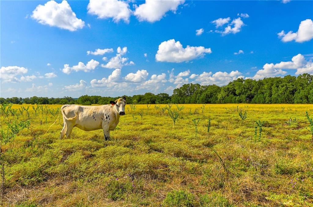 Own your own gorgeous piece of the country with this 10+ acre tract! This beautiful lot has several places to build your dream home, and enjoy the peace and quiet of the country. Bring your horses or other animals! Perfect property for an equestrian. You will still be less than an hour from Austin, yet minutes to Georgetown and Leander/Cedar Park for all your shopping, medical, and business needs. Additional tracts are available. Liberty Hill ISD! Owner/agent.