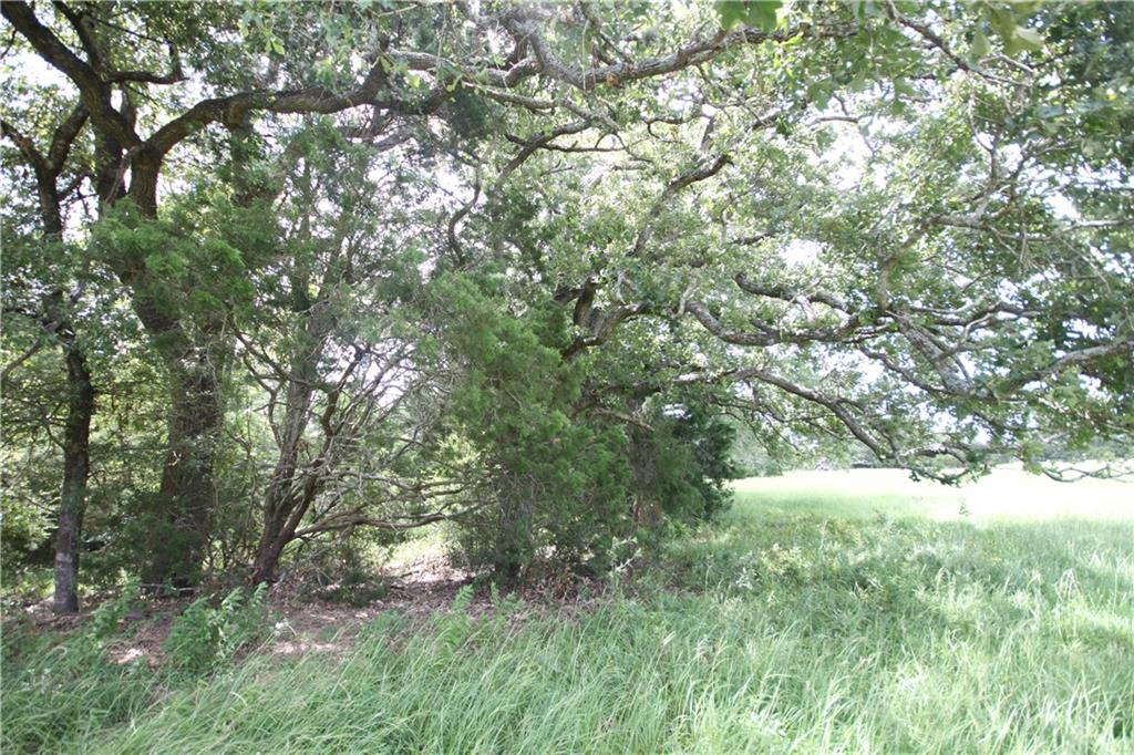 13.087 Acres!  Nice property with open pasture and trees!  Fenced.  Paved FM 535 frontage.  Nice location between Smithville and Rosanky!  Under $200,000 - can't beat the price!