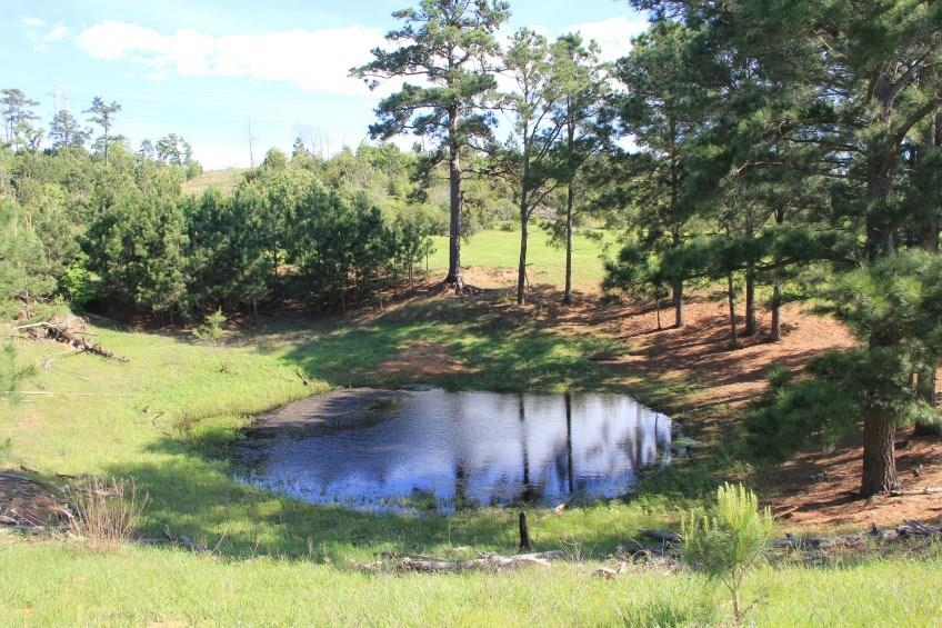 NICE FAMILY SIZE TRACT THAT FEATURES ROLLING TERRAIN AND GRASSY MEADOWS THAT CONSIST OF IMPROVED COASTAL.  THIS WOULD BE AN EXCELLENT HORSE PROPERTY OR TO GRAZE A FEW CATTLE. LARGE POST OAKS AND SOME PINES ARE SCATTERED IN THE MEADOW. A SURFACE WATER TANK SURROUNDED BY PINE TREES IS LOCATED AT THE BACK OF THE PROPERTY AS WELL AS ANOTHER POND THAT IS LOCATED AT THE FRONT OF THE TRACT. THERE IS A NICE HILLTOP THAT OFFERS PRETTY LONG DISTANCE VIEWS. Contact Listing agent for a showing.Restrictions: Yes