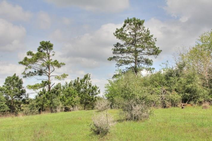 NICE SIZE SMALLER TRACT WITH ROLLING TERRAIN. EASY ACCESS OFF GOITIER TRACE ROAD, A PAVED COUNTY ROAD. EASY ACCESS TO THE CITIES OF BASTROP & SMITHVILLE. LIVE OAK, POST OAK, PINE, AND OTHER NATIVE TREES ARE SCATTERED ACROSS THE PROPERTY. SEASONAL CREEK TRANSVERSES THE FRONT OF THE PROPERTY AND WINDS ALONG THE EAST TO THE BACK. LIGHT RESTRICTIONS. NO POA FEES!  GREAT HOME SITE AND RECREATIONAL PROPERTY THAT IS CLOSE TO SHOPPING AND THE SCHOOLS. ADDITIONAL ACREAGE AVAILABLE.Restrictions: Yes
