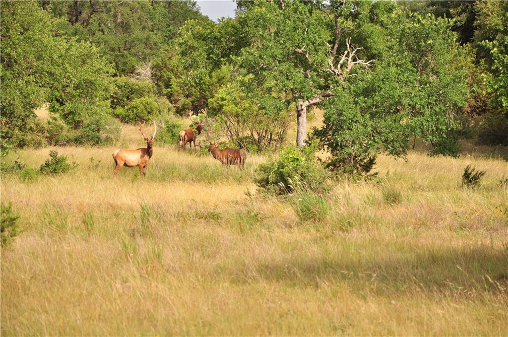 Ranch #3 Liberty Ranch RD, Hays, Texas 78610, ,Land,For Sale,Liberty Ranch,5650007