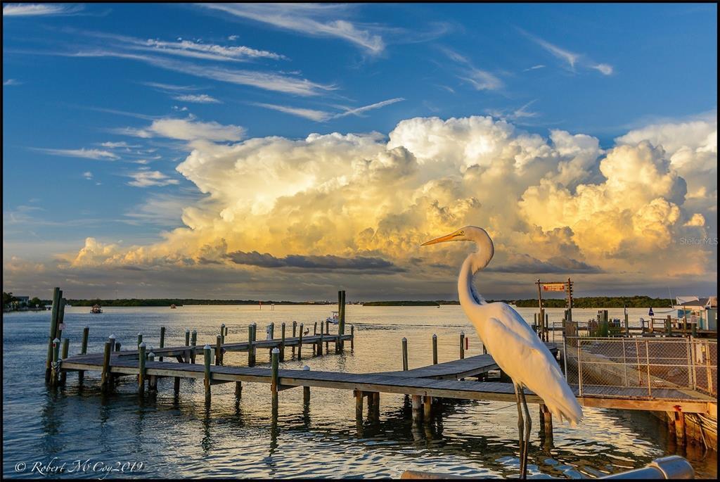 279 104TH AVENUE, TREASURE ISLAND FL 33706