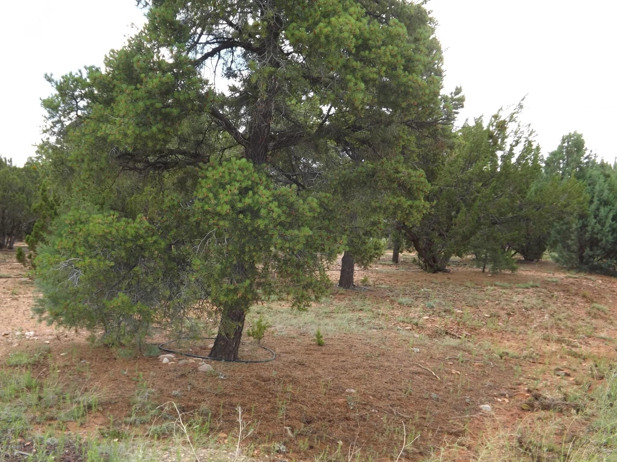 2802 CHANDELLE Lane # 334, Overgaard, Arizona 85933, ,Land,For Sale,2802 CHANDELLE Lane # 334,6023580